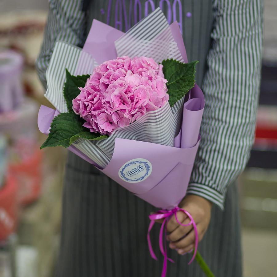 Розовая гортензия в стильной пленке