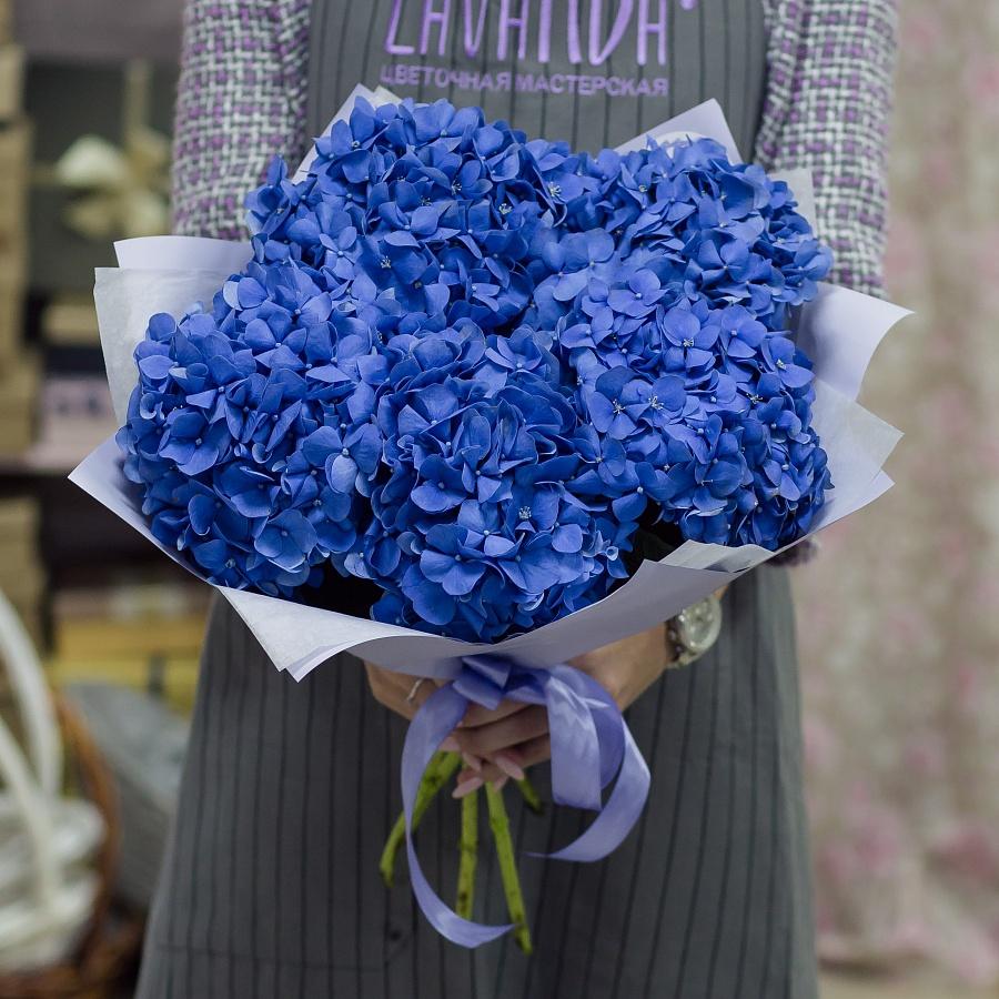 5 синих гортензий в стильной пленке