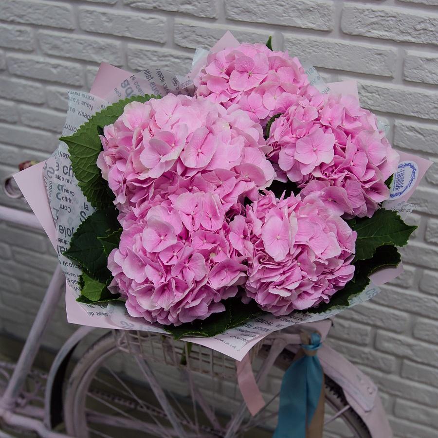 5 розовых гортензий в стильной пленке