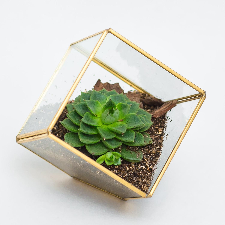 """Флорариум """"Куб"""""""