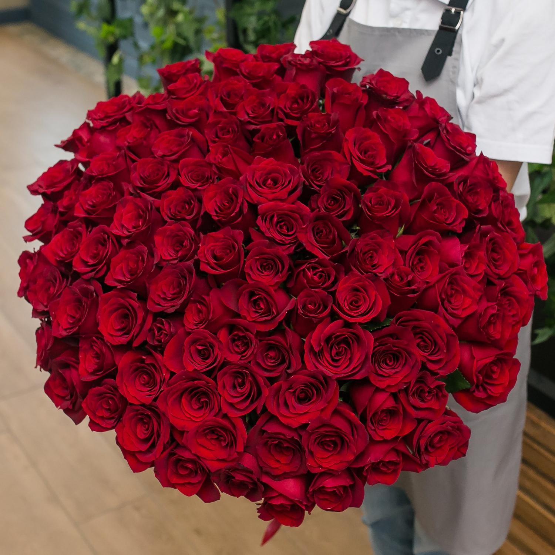 101 красная Эквадорская роза 60 см.