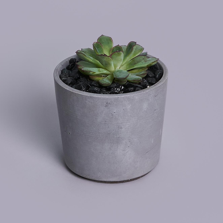 Суккулент в бетонном кашпо