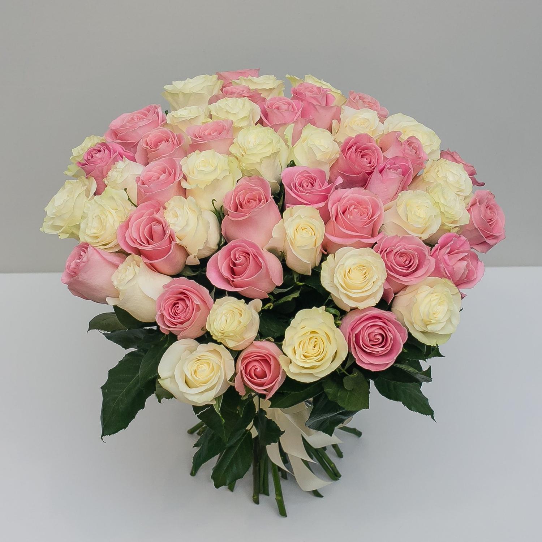 51 бело-розовая Эквадорская роза 60 см.